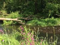 Balade le long du Viroin à Dourbes