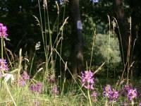 Balade nature dans une nature sauvage préservée